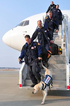 United States Agency for International Development search and rescue dogs along with their handlers arrived at Misawa Air Base, Japan (above). U.S. Air Force photo by Staff Sgt. Marie Brown