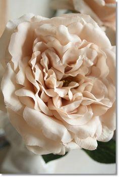 【定形外発送対応可能】エクリュロザリンローズ(ダークベージュ)1本【造花・アートフラワー】