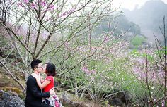 Peach flowers flourish in Moc Chau in winter -  In winter, Moc Chau Town, Son La becomes romantic and attractive due to beautiful flowers. Especially, it's time for peach flowers to fully bloom all around the roads, mountains and hills, which draws much attention of tourists.  #BestOfVietnam, #MocChau, #ThingsToDoInSonla, #VisitVietnam, #WinterFlower -  #Destination, #DestinationintheNorth, #SonLa