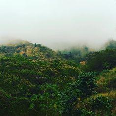 "74 Likes, 2 Comments - Alana Gardner (@alana.gardner) on Instagram: ""When It Rains ✨ . . #Rain #Fog #Mist #Jamaica #Sky #Me #Love #Gaia #Nature #Photography #Mountains…"""