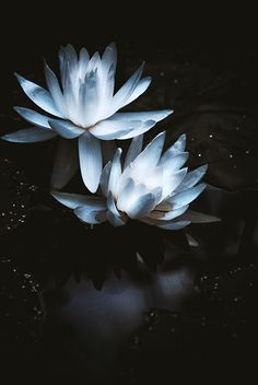 I love the emergence of the lilies from the darkness of the pond.