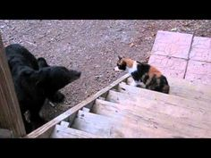 Cat Can't Bear Having Someone Sneak Up On Him - Cheezburger