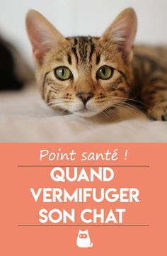 Dogs, Souvenir, Never Enough, World Cutest Dog, Cat Beds, Cat Breeds, Pet Dogs, Doggies