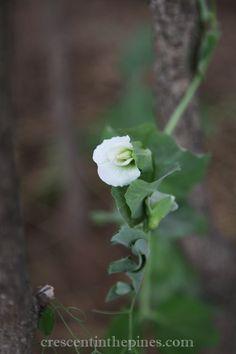 Spring Green Salad with Gorgonzola Vinaigrette Gardening Photography, Spring Green, Vinaigrette, Plants, Flora, Plant, Vinaigrette Dressing