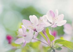Spring Blossom Spring Blossom, Photography Photos, Spring Flowers, Plants, Planets, Spring Blooms