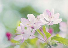 Spring Blossom Spring Blossom, Photography Photos, Plants, Flora, Plant