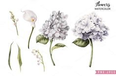 White flowers by ollalya on @creativemarket