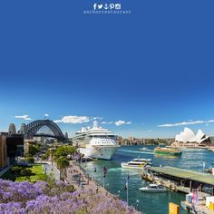 For the best ferry trips in Sydney ⚓ ANCHOR Cafe & Restaurant - Taste the difference!  Visiting #SydneyHarbour OR on a #SydneyHarbourCruise with #SydneyFerries all the way from #ParramattaRiver to #CircularQuay #DarlingHarbour #NeutralBay #TarongaZoo #ManlyWharf & #MosmanBay  We are just a short walk up from the #FerryWharf next to #LunaPark on #AlfredStreet and on the corner of #LavenderStreet #MilsonsPoint #LavenderBay #Kirribilli #NorthSydney #SydneyAustralia