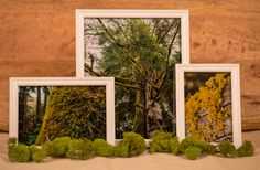 Creating DIY Wall Art with Picture Clusters Moss Art, Diy Wall Art, Sustainable Living, Diy Crafts, Create, Green, Home Decor, Decoration Home, Room Decor