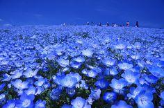 Magnificent Flower Gardens Near Tokyo | Travelience