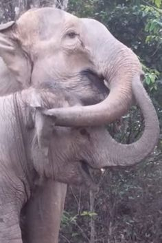 This Young Elephant's Emotional Reunion With Mom Is The Uplifting Story You Need Today