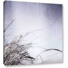 ArtWall Kevin Calkins Dune Grass Abstract Gallery-Wrapped Canvas, Size: 24 x 24, White