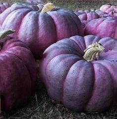 Purple pumpkins - these are stunning
