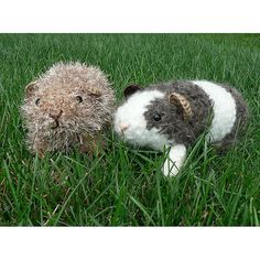 Ravelry. Amigurumi guinea pigs by planetjune,