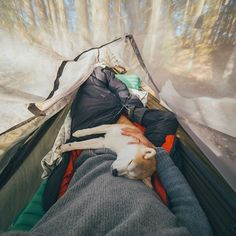 Your own personal, traveling teddy bear. #campingwithdogs @cmaiadventures