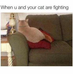 When you and your cat are fighting loool
