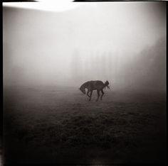 Taken with a Holga toy camera. Urban Decay Photography, Horse Photography, Image Photography, Creative Photography, Pinhole Camera, Toy Camera, Holga, Photo Black, Wild Horses