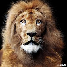 Lion, created by GUGAFIRE using 3dsmax and VRay.