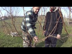 Stříhání vinné révy - YouTube Sauvignon Blanc, Gardening For Beginners, Fruit Trees, Grape Vines, Garden Plants, Rv, Flora, Youtube, Apollo