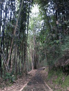 JOGMAG: Hutan Bambu Sekar Langit Magelang