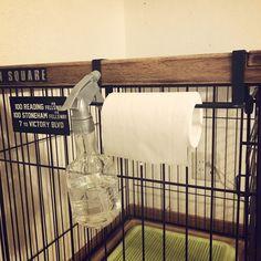 セリア/犬のいる暮らし/シンプルに暮らしたい/ペットゲージをリメイクのインテリア実例 - 2017-09-29 09:14:09 | RoomClip (ルームクリップ) Horse Barn Plans, Cat Cave, Crate Storage, Dog Hacks, Dog Houses, Dog Ramp, Dog Supplies, Dog Photos, Dog Grooming