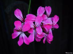 Flower 23 by Mohammad Azam
