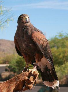 Gavi, Desert Sonora Museum in Tucson, Arizona. Arizona Birds, Tucson Arizona, Amazing Places, Beautiful Places, Sonora Desert, Arizona Travel, Creature Feature, Zoo Animals, Great Pictures