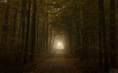 Fondo de pantalla con un bosque de niebla espesa
