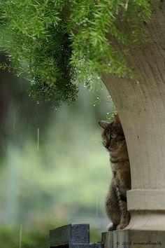 Cats in Hong Kong in a rainy day. I Love Cats, Cute Cats, Funny Cats, Amor Animal, Mundo Animal, Crazy Cat Lady, Crazy Cats, Gatos Cats, Jolie Photo