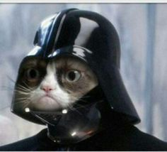 Mad Cat   The Force is with you. Like it or not