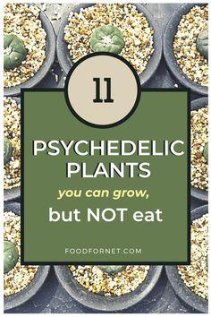 Mushroom Spores, Mushroom Cultivation, Fast Growing Plants, Growing Herbs, Growing Psychedelic Mushrooms, Growing Mushrooms At Home, Psilocybin Mushroom, Design Jardin, Apothecaries