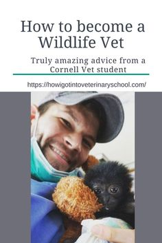 Thinking about applying to vet school or already in vet school? Read some amazing advice from this Cornell Vet student. #Vetschool #veterinarian #wildlifevet #onehealth