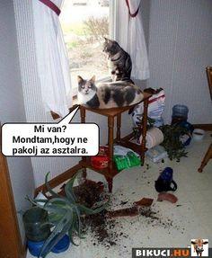 Minden, Bullshit, Funny Comics, Hungary, Baby Animals, Haha, Funny Pictures, Schmuck, Fanny Pics