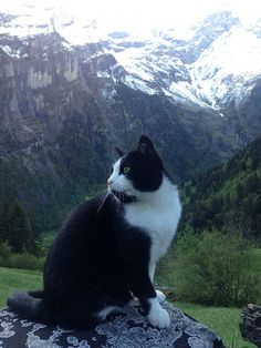 Here's a heartwarming story fromReddit of this wonderful mountain cat, who helps lost travelers find their way back home. Reddit user sc4s2cg was wandering in Gimmelwald, Switzerland in 2013…