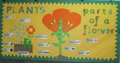 Parts of a plant classroom display photo from Almudena. Parts of a plant classroom display photo fro Class Displays, School Displays, Classroom Displays, Photo Displays, Teaching Displays, Classroom Ideas, Primary Science, Teaching Science, Science Activities