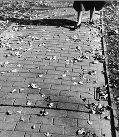 Fall leaves, 1953  Photo by Loomis Dean