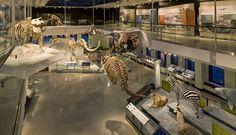 national museum of natural history mammals - Buscar con Google