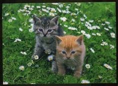 animals cats kittens grey and orange striped kittens on grass ...