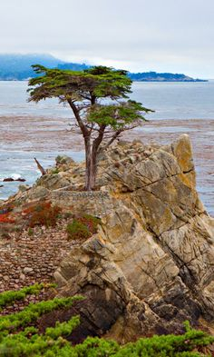 Married here 20 years ago this week. Going back tomorrow!! The Lone Cypress, 17 Mile Drive, Carmel, CA