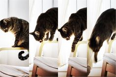 Lomocat (by @adosc) #cat #animals #pets #lomography