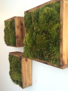 This lush moss backyard options reside clump moss and a reclaimed wooden body for yo.... See more at the picture