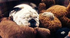 Iggy and his stuffed pal...