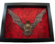 Batpicture