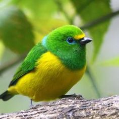 What a beautiful green and yellow birdie