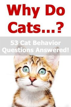 Why Do Cats? The Ultimate Guide To Feline Behavior kitten behavior - Kittens Why Do Cats. The Ultimate Guide To Feline Behavior I Love Cats, Cute Cats, Cat Behavior Problems, Dog Behavior, First Time Cat Owner, Cat Biting, Cat Hacks, Cat Care Tips, Dog Care