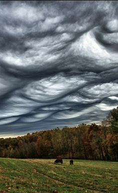 Above The Clouds, Sky And Clouds, Undulatus Asperatus, Earth Weather, Mammatus Clouds, Sky Watch, Earth Wind & Fire, Natural Phenomena, Places