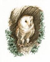 Barn Owl | VK
