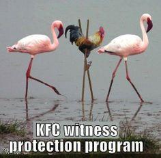 KFC witness protection program / HA! / funny photos