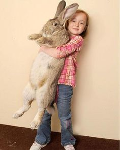 """holy crap! the largest bunny in the world, darius. 4'3"""" in length and 50 pounds."""