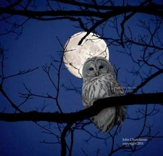 Amazing photo of owl with a full moon in the background.